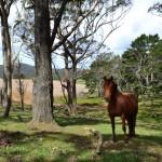Pferd: ein bekanntes Gesicht.