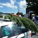 Hang loose? Der Baum macht's vor...