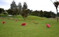 Pinke Schafe grasen grün.